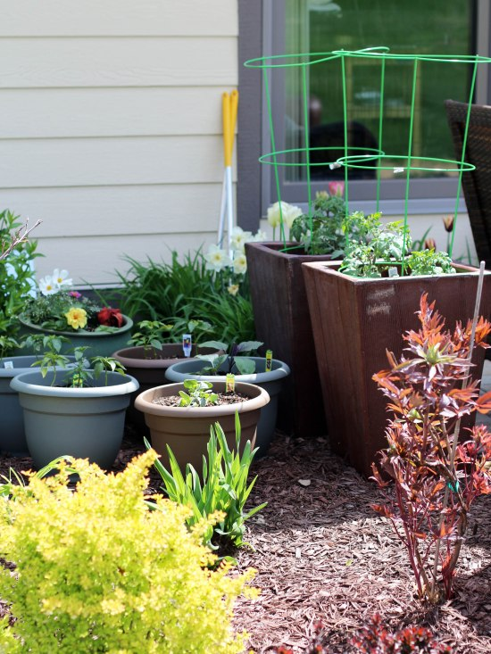 veggie pots May