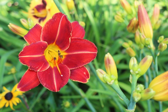 2014 July 21 lily red