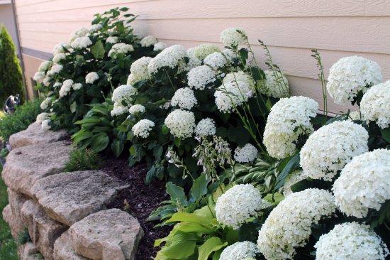 2014 July plants